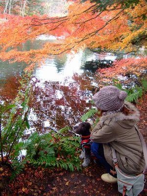 雲場池の水面の紅葉