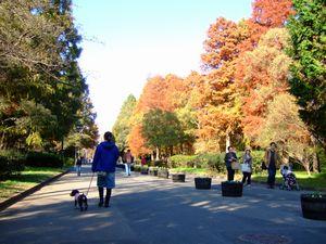 紅葉の水元公園