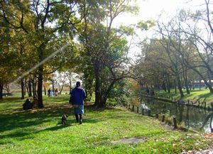 紅葉の水元公園2