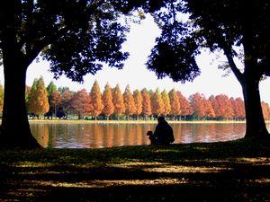 紅葉の水元公園湖畔