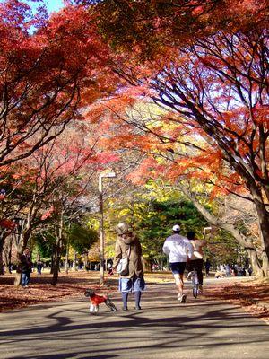 代々木の紅葉