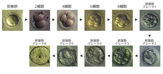 koudo_02.jpg