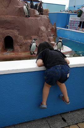 ペンギンにさらに夢中(笑)
