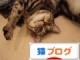にほんブログ村猫ブログへ