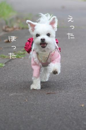 10_15_6201.jpg