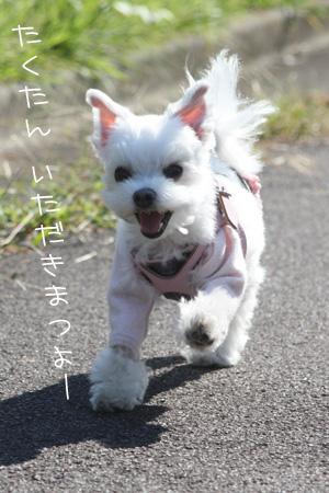 10_16_6310.jpg
