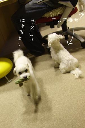 11_11_0281.jpg