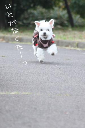 11_11_0334.jpg
