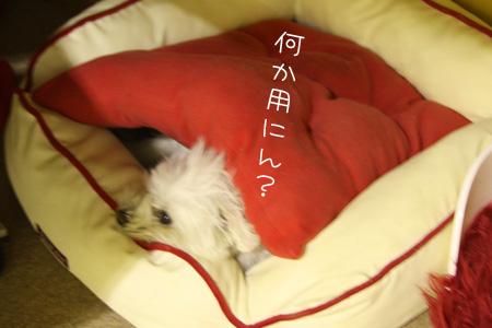 11_12_0378.jpg