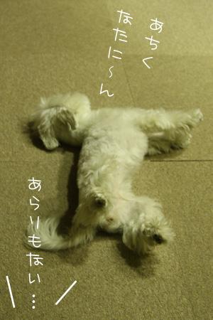 11_12_0386.jpg