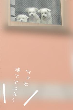 11_12_6755.jpg