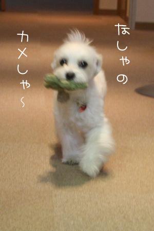 11_16_1034.jpg