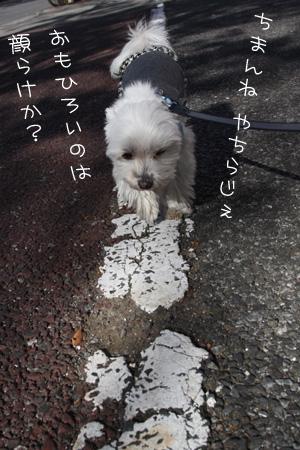11_20_1581.jpg