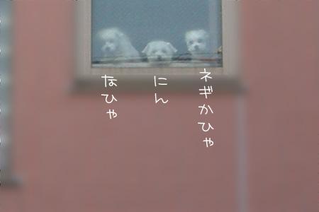 11_28_6809.jpg