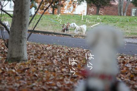 11_29_2626.jpg