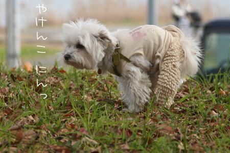 11_29_2683.jpg