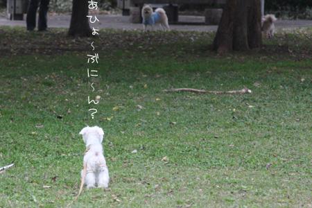 11_3_9208.jpg