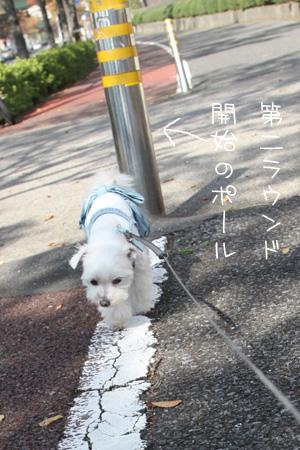 11_7_9626.jpg