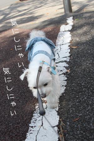 11_7_9631.jpg
