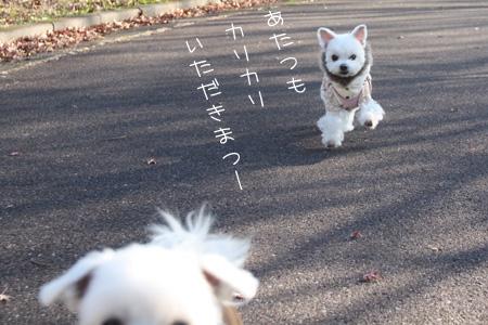 12_15_3713_1.jpg