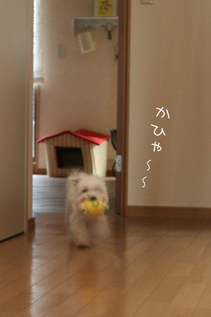 12_18_4557.jpg