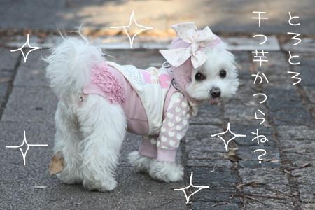 12_19_4343.jpg