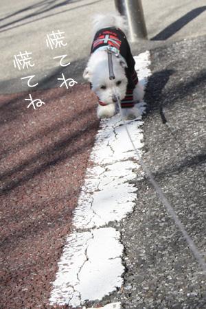 1_13_7028.jpg