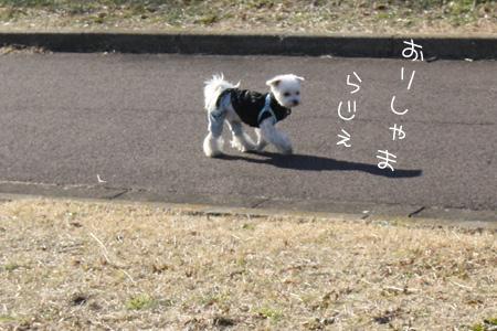 1_16_7595.jpg
