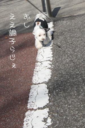 1_5_6297.jpg