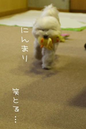 1_9_6723.jpg
