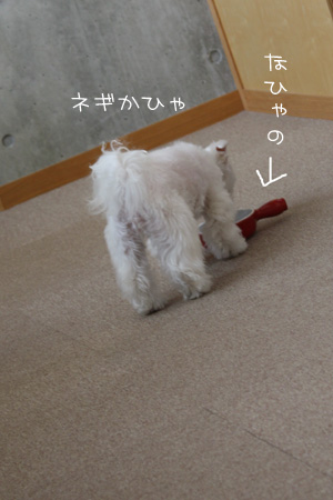 2_10_3520.jpg