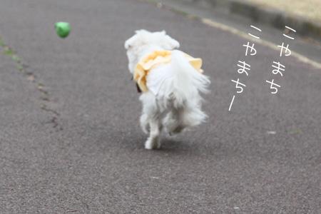 2_13_4049.jpg