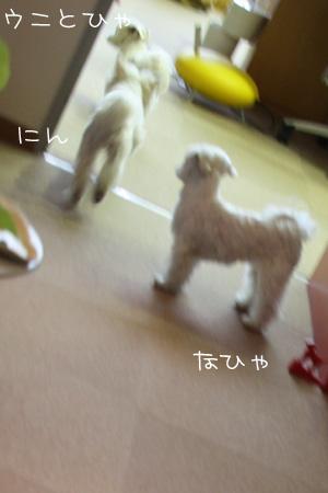 2_15_4447.jpg