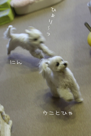2_20_5219.jpg