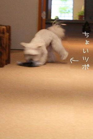2_5_2076.jpg