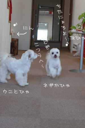 2_6_2188.jpg