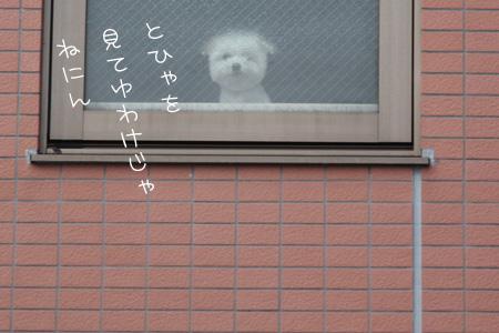 2_9_3456.jpg
