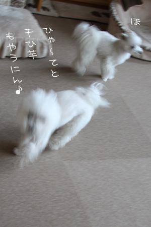 2_9_3514.jpg