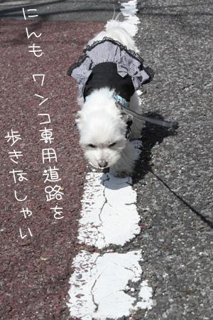 3_29_3125.jpg