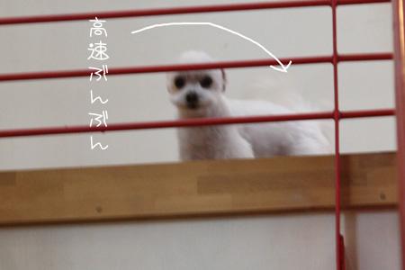 3_8_8079.jpg