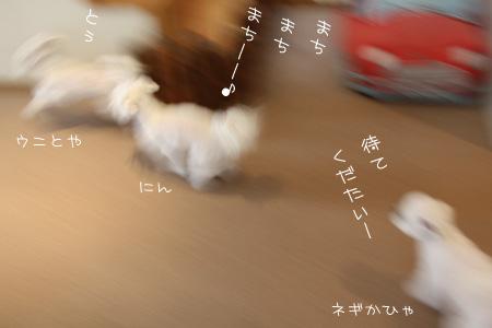 3_8_8087.jpg