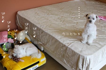 3_9_8181.jpg