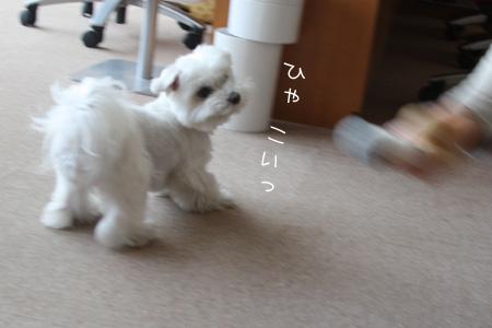 4_10_5978.jpg