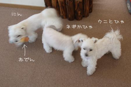 4_11_6685.jpg