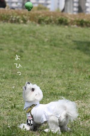 4_12_6775.jpg