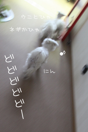 4_14_7015.jpg