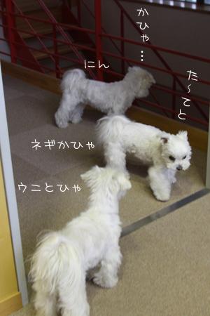 4_17_7638.jpg