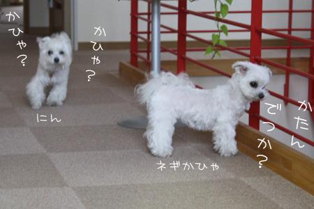 4_17_7681.jpg