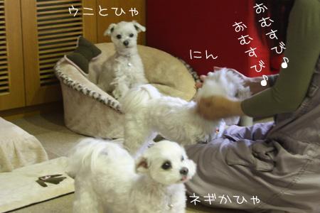 4_17_7762.jpg