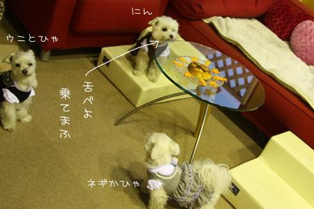 4_18_8009.jpg